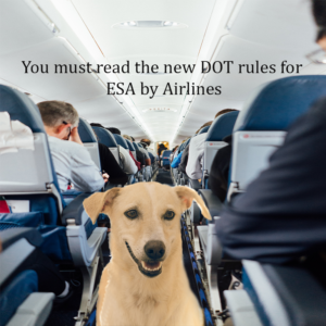 Know About New Rules of Airlines before Traveling With Your Emotional Support Animals