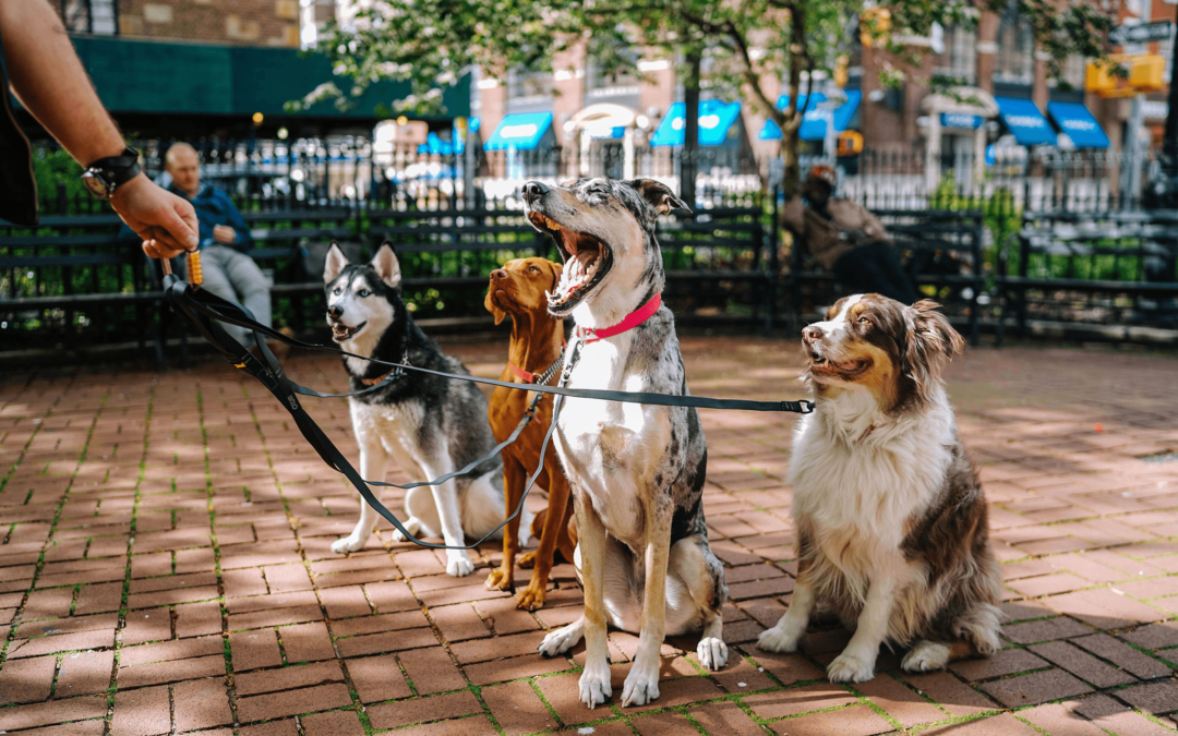 The most popular dog breeds for Emotional Support Animal
